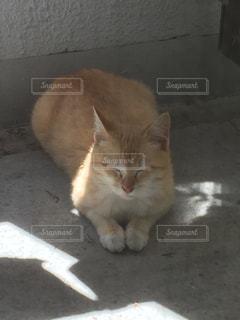 茶トラ子猫の日向ぼっこの写真・画像素材[2196895]