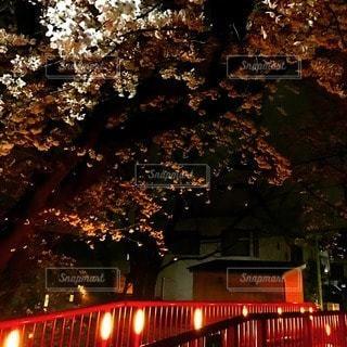 夜の写真・画像素材[92388]