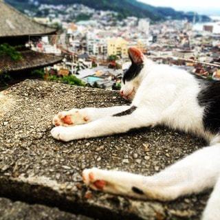 猫の写真・画像素材[92561]