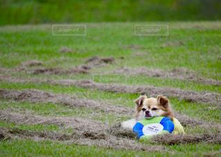 フリスビー🥏と子犬の写真・画像素材[2206212]