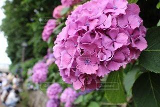 花の写真・画像素材[88411]