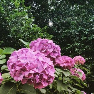 花の写真・画像素材[116578]