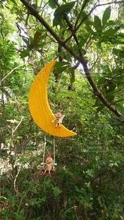 木からぶら下がっているオレンジの写真・画像素材[2193728]