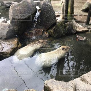 温泉は気持ちいいの写真・画像素材[2202890]