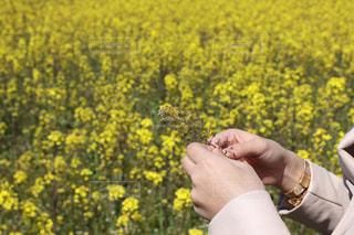 草花の写真・画像素材[2806596]