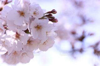 花のクローズアップの写真・画像素材[2912548]