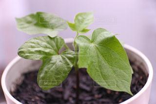 緑の植物の写真・画像素材[3269965]