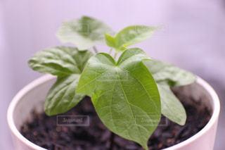 植物のクローズアップの写真・画像素材[3269964]