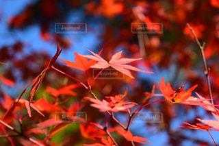 秋の写真・画像素材[402381]