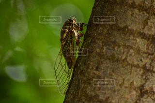 枝に座る鳥の写真・画像素材[2211899]