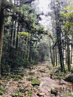 トトロの森の写真・画像素材[2197478]