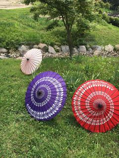梅雨の芝生に広がる傘の写真・画像素材[3080628]