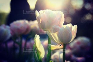 花の写真・画像素材[86475]