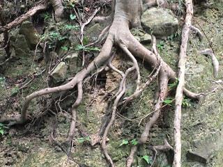 ジブリの世界の写真・画像素材[2211823]