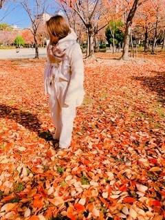 紅葉のじゅうたんと女性の写真・画像素材[2771574]