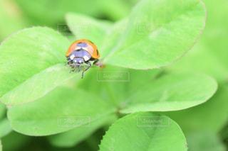 あーてんとう虫の写真・画像素材[2197881]