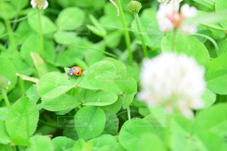 てんとう虫ですの写真・画像素材[2197891]