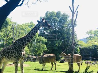 天気がいい日の動物園😝👍の写真・画像素材[2217898]