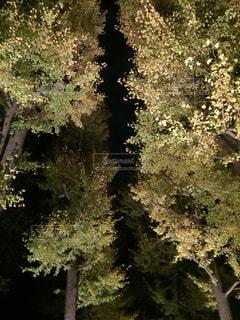 紅葉ライトアップの写真・画像素材[2230327]