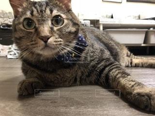猫の接写の写真・画像素材[2200569]
