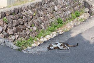 岩壁の上に横たわる猫の写真・画像素材[2210011]