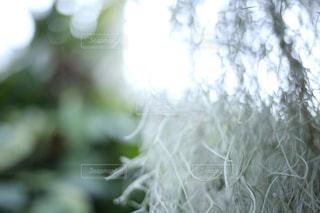 葉のクローズアップの写真・画像素材[2202134]