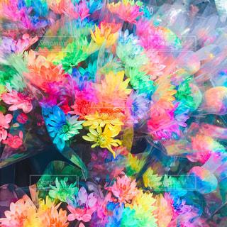 カラフルな花の写真・画像素材[2202955]
