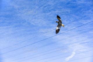 猛禽類と青空の写真・画像素材[2245664]