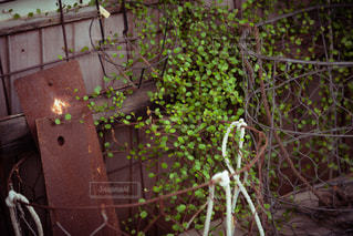アンティークな草木の写真・画像素材[2245727]