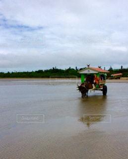 由布島の水牛車の写真・画像素材[2201187]