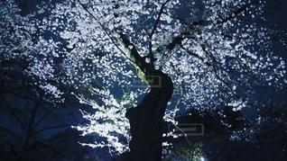 花の写真・画像素材[86800]