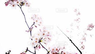 花の写真・画像素材[403676]