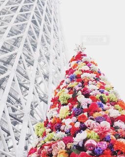 スカイツリーと花のクリスマスツリー - No.930866