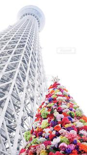 スカイツリーと花のクリスマスツリーの写真・画像素材[930867]