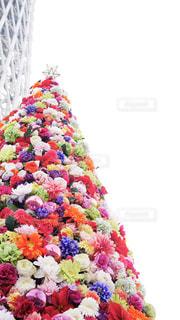 スカイツリーと花のクリスマスツリーの写真・画像素材[930870]