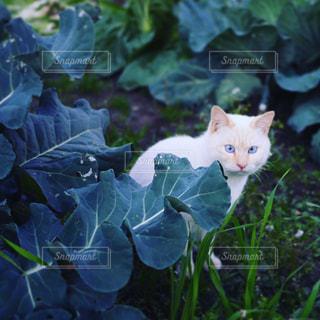 庭園の緑の植物の上に座っている猫の写真・画像素材[986938]