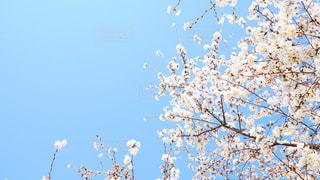 木の上を飛ぶ鳥の群れの写真・画像素材[1138566]