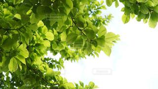 木の葉の写真・画像素材[2048972]