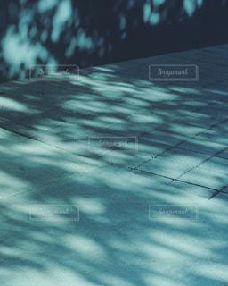 地面に落ちた木漏れ日の写真・画像素材[2318648]