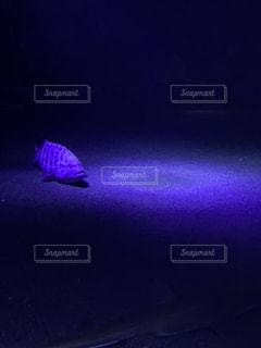 暗い部屋の中の紫色の光の写真・画像素材[2203194]