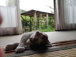 窓の前に横たわる猫の写真・画像素材[2276525]