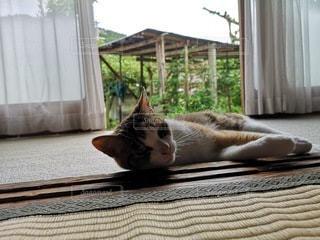 ベッドに横たわる猫の写真・画像素材[2276526]