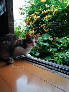 窓の前に座っている猫の写真・画像素材[2276535]