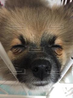 犬 - No.353171