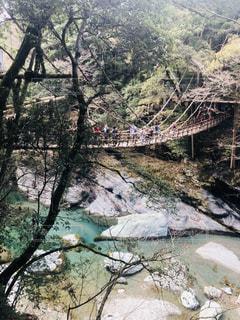 森の川に架かる橋の写真・画像素材[2204516]