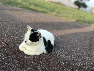 地面に横たわっている猫の写真・画像素材[2206181]