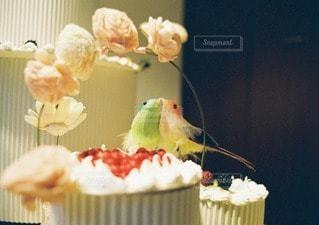 食べ物の写真・画像素材[90735]