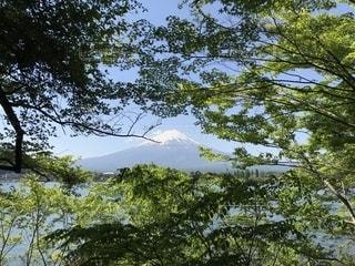 森の中から見えた富士山の写真・画像素材[2204562]