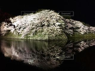 桜の写真・画像素材[2207668]
