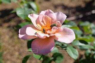 植物の上のピンクの花の写真・画像素材[2205447]